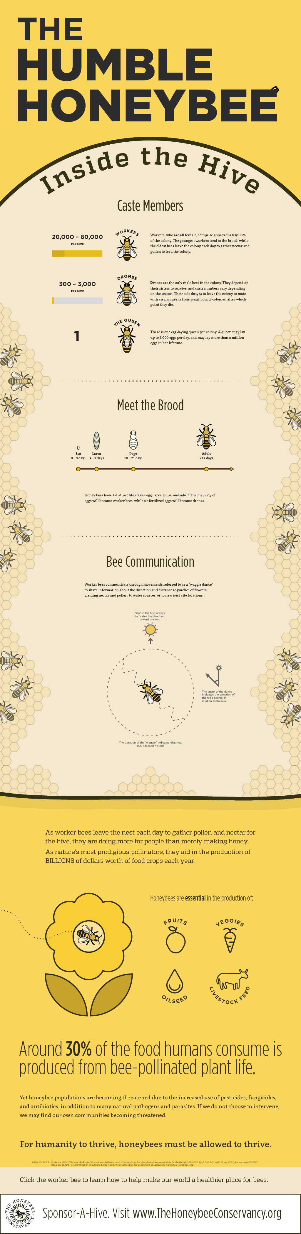 'The Humble Honeybee', a bee infographic by Hayden Loos ...